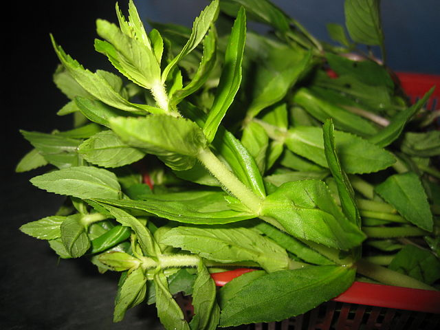 Rice Paddy Herb